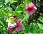 McKee_Botanical_Gardens_12_7-27-2014
