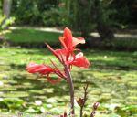 McKee_Botanical_Gardens_15_7-27-2014