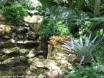 McKee_Botanical_Gardens_17_7-27-2014