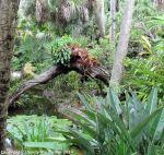 McKee_Botanical_Gardens_19_7-27-2014