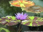 McKee_Botanical_Gardens_1_7-27-2014