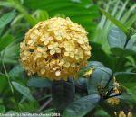 McKee_Botanical_Gardens_20_7-27-2014