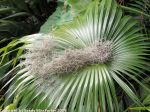 McKee_Botanical_Gardens_21_7-27-2014