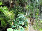 McKee_Botanical_Gardens_25_7-27-2014