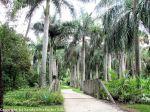 McKee_Botanical_Gardens_28_7-27-2014