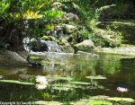 McKee_Botanical_Gardens_3_7-27-2014