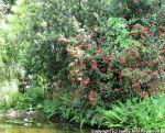 McKee_Botanical_Gardens_6_7-27-2014