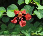 McKee_Botanical_Gardens_9_7-27-2014